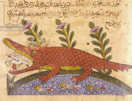صورة التمساح من كتاب الحيوان للجاحظ