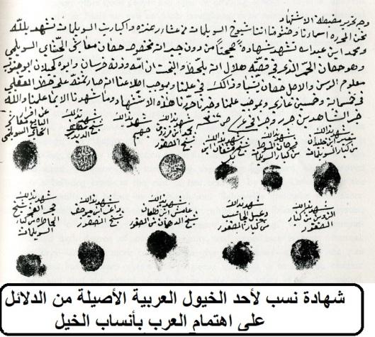 شهادة نسب لأحد الخيول العربية الأصيلة من الدلائل على اهتمام العرب بأنساب الخيل