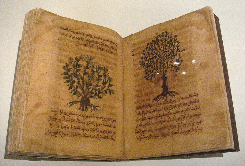 800px-Dioscorides_De_Materia_Medica_Spain_12th_13th_century