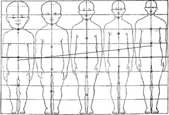 تغير تناسب جسم الإنسان